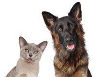 Chat et chien d'isolement sur le fond blanc Image libre de droits