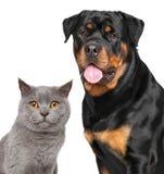 Chat et chien d'isolement sur le fond blanc Image stock