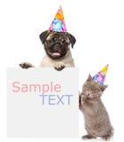 Chat et chien dans des chapeaux d'anniversaire jetant un coup d'oeil par derrière le conseil vide et regardant l'appareil-photo L Photo libre de droits