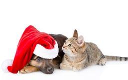 Chat et chien dans le chapeau de Santa Claus D'isolement sur le fond blanc Photos stock