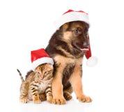 Chat et chien dans le chapeau rouge de Santa se reposant ensemble D'isolement sur le blanc Image stock