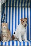 Chat et chien dans une chaise de plage Photos stock