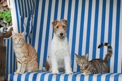 Chat et chien dans une chaise de plage Photographie stock libre de droits