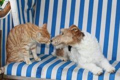 Chat et chien dans une chaise de plage Photographie stock