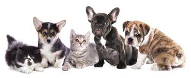 Chat et chien de groupe Images libres de droits