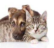 Chat et chien de plan rapproché ensemble sur le fond blanc Images stock