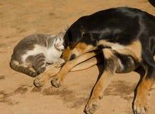 Chat et chien dormant sur le plancher Photographie stock