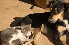 Chat et chien dormant sur le plancher Image stock