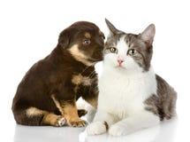 Chat et chien ensemble. Photo libre de droits