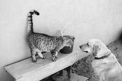 Chat et chien ensemble Photos libres de droits