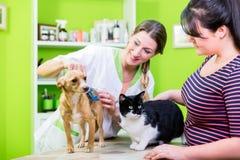 Chat et chien ensemble au coiffeur de vétérinaire ou d'animal familier Photos stock