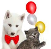 Chat et chien ensemble, chaton écossais, chiot enroué Humeur de partie D'isolement sur le blanc Photo stock