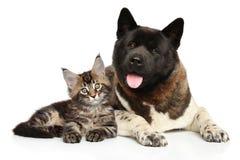 Chat et chien ensemble sur le fond blanc Photographie stock