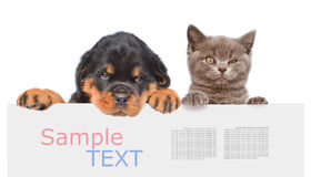 Chat et chien jetant un coup d'oeil par derrière le conseil vide et regardant le camer Image libre de droits