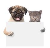 Chat et chien jetant un coup d'oeil par derrière le conseil vide et regardant l'appareil-photo D'isolement sur le blanc Images libres de droits