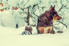 Chat et chien jouant dans la neige Photographie stock