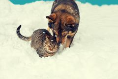 Chat et chien jouant ensemble Photo libre de droits