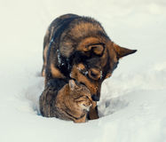 Chat et chien jouant ensemble Photos libres de droits