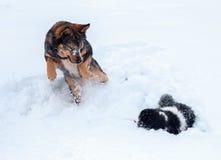 Chat et chien jouant ensemble sur la neige Photos stock