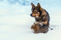 Chat et chien jouant ensemble sur la neige Photographie stock libre de droits