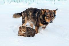Chat et chien jouant ensemble sur la neige Photo stock