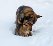 Chat et chien jouant ensemble sur la neige Images stock
