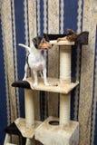 Chat et chien jouant sur Cat Tree Photos libres de droits
