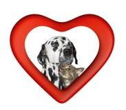Chat et chien mignons de valentine au coeur rouge d'isolement sur le blanc Photos stock