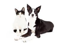 Chat et chien noirs et blancs Image stock