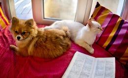Chat et chien s'étendant sur la fenêtre Photographie stock libre de droits