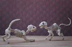 Chat et chien squelettiques Photographie stock libre de droits
