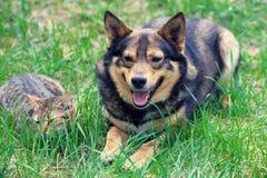 Chat et chien sur l'herbe Image libre de droits