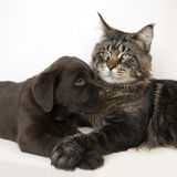 Chat et chiot Photo stock