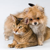 Chat et chiot dans le studio image stock