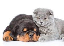 Chat et chiot de rottweiler de sommeil se trouvant ensemble D'isolement sur le blanc Photo libre de droits