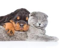 Chat et chiot de rottweiler dormant ensemble D'isolement sur le blanc Image stock