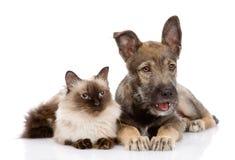 Chat et chiot ensemble Regard loin D'isolement sur le backgrou blanc Photo libre de droits