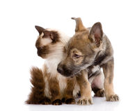 Chat et chiot ensemble Regard loin D'isolement sur le backgrou blanc Image libre de droits