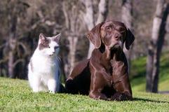 Chat et crabot Photo libre de droits
