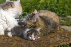 Chat et enfants de maman Photos stock