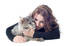 Chat et femme de ragondin du Maine Images stock