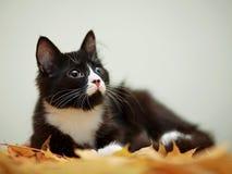 Chat et feuilles d'automne noirs et blancs Photo libre de droits