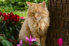 Chat et fleurs mignons de gingembre Image libre de droits