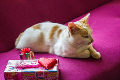 Chat et foyer sélectif de chocolat et de sucrerie de coeur Images stock