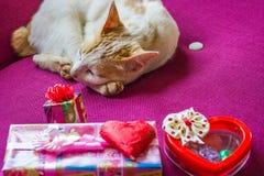 Chat et foyer sélectif de chocolat et de sucrerie de coeur Image stock