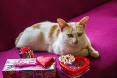 Chat et foyer sélectif de chocolat et de sucrerie de coeur Photos stock