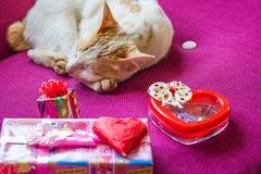 Chat et foyer sélectif de chocolat et de sucrerie de coeur, Valentine Day Image stock