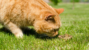 Chat et grenouille Photo stock