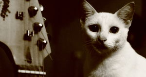 Chat et guitare Photo stock