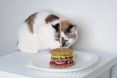 Chat et hamburger pelucheux mignons sur le fond blanc Photographie stock libre de droits